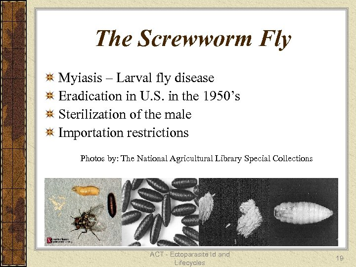 The Screwworm Fly Myiasis – Larval fly disease Eradication in U. S. in the