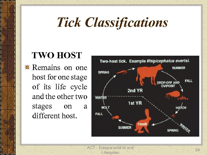 Tick Classifications TWO HOST Remains on one host for one stage of its life