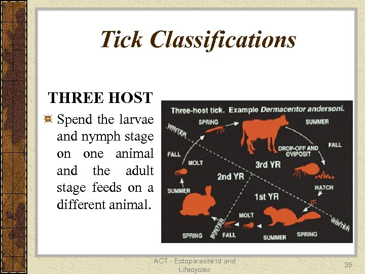 Tick Classifications THREE HOST Spend the larvae and nymph stage on one animal and