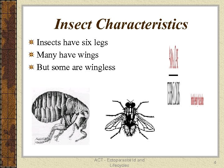 Insect Characteristics Insects have six legs Many have wings But some are wingless ACT