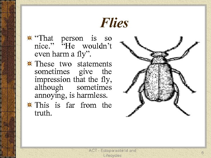 "Flies ""That person is so nice. "" ""He wouldn't even harm a fly"". These"