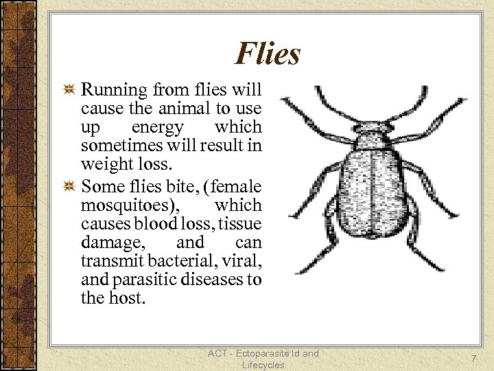 Flies Running from flies will cause the animal to use up energy which sometimes