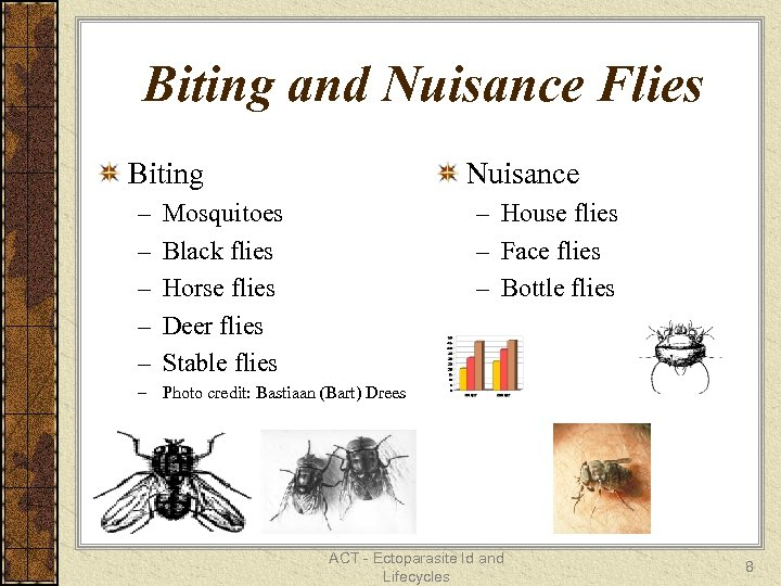 Biting and Nuisance Flies Biting – – – Nuisance – House flies – Face