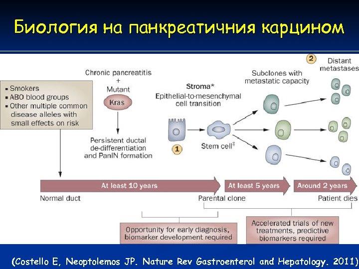 Биология на панкреатичния карцином (Costello E, Neoptolemos JP. Nature Rev Gastroenterol and Hepatology. 2011)