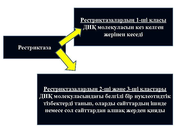 Рестриктазалардың 1 -ші класы ДНҚ молекуласын кез келген жерінен кеседі Рестриктазалардың 2 -ші және