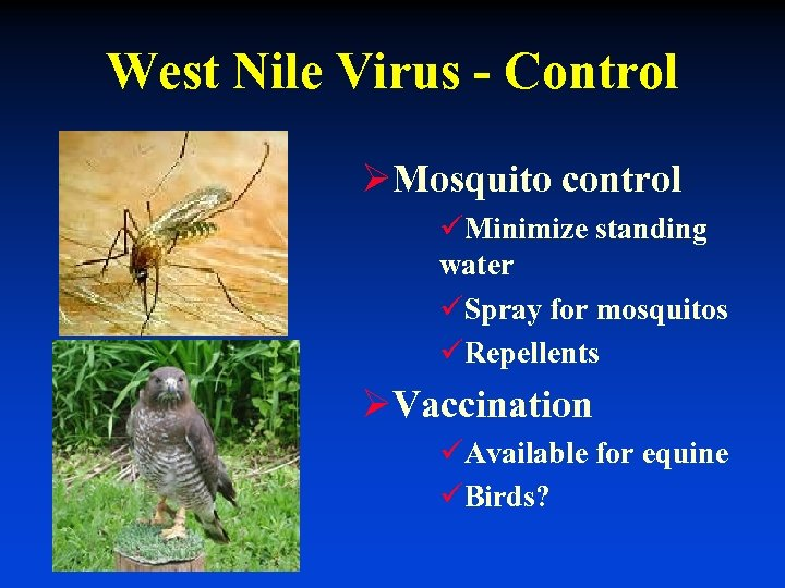 West Nile Virus - Control ØMosquito control üMinimize standing water üSpray for mosquitos üRepellents