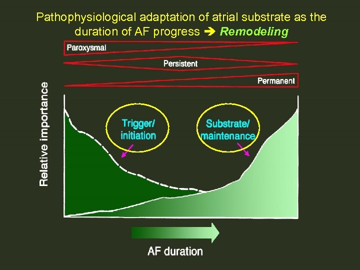 Pathophysiological adaptation of atrial substrate as the duration of AF progress Remodeling