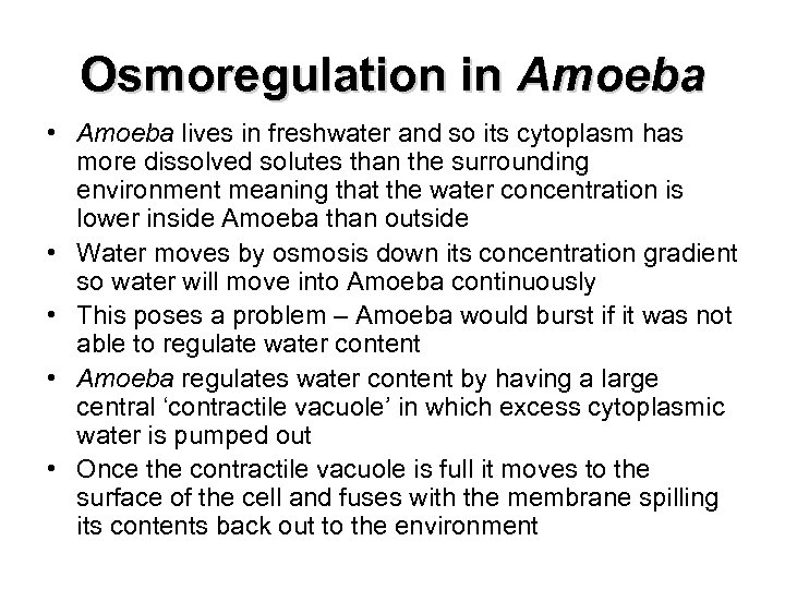Osmoregulation in Amoeba • Amoeba lives in freshwater and so its cytoplasm has more