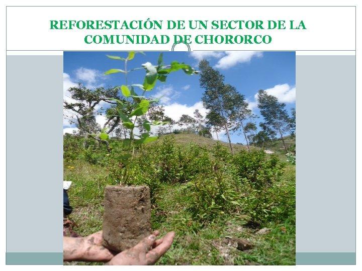 REFORESTACIÓN DE UN SECTOR DE LA COMUNIDAD DE CHORORCO