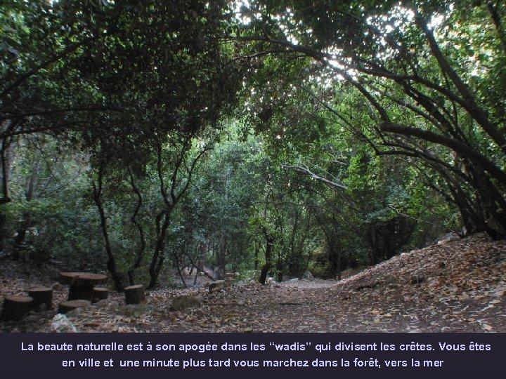 """La beaute naturelle est à son apogée dans les """"wadis"""" qui divisent les crêtes."""