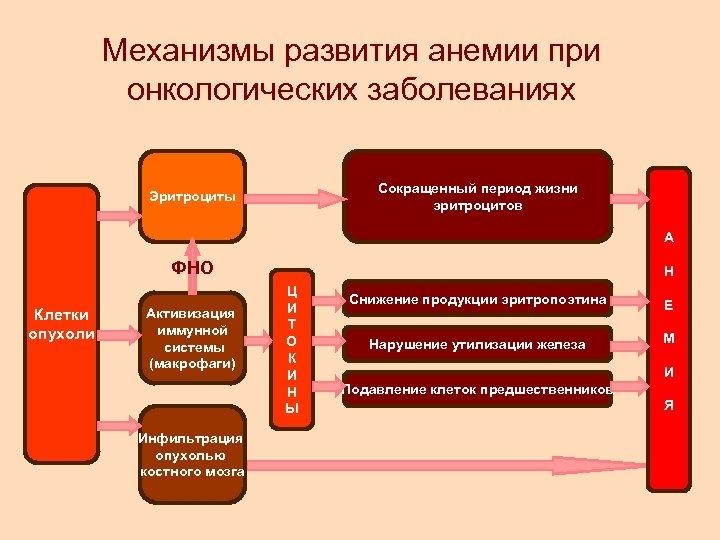 Механизмы развития анемии при онкологических заболеваниях Сокращенный период жизни эритроцитов Эритроциты А ФНО Клетки