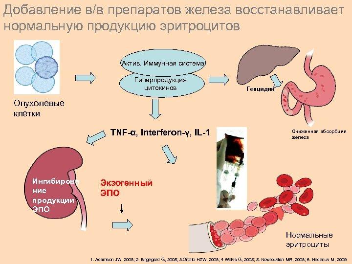 Добавление в/в препаратов железа восстанавливает нормальную продукцию эритроцитов Activated immune Актив. Иммунная система system