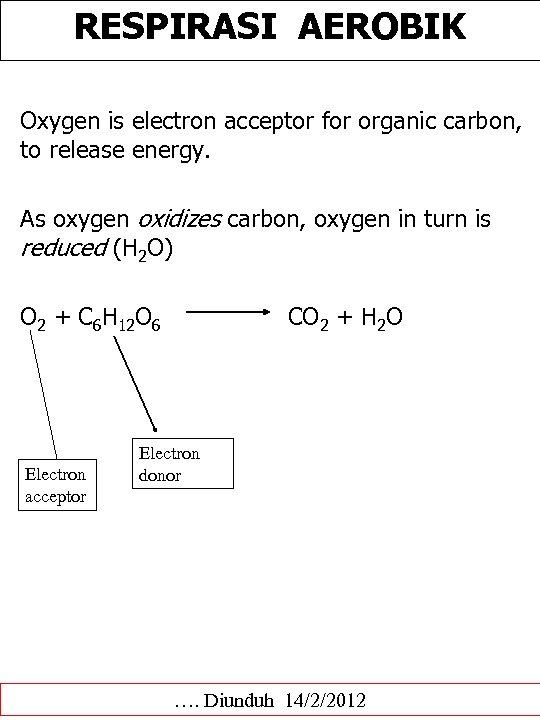 RESPIRASI AEROBIK Oxygen is electron acceptor for organic carbon, to release energy. As oxygen