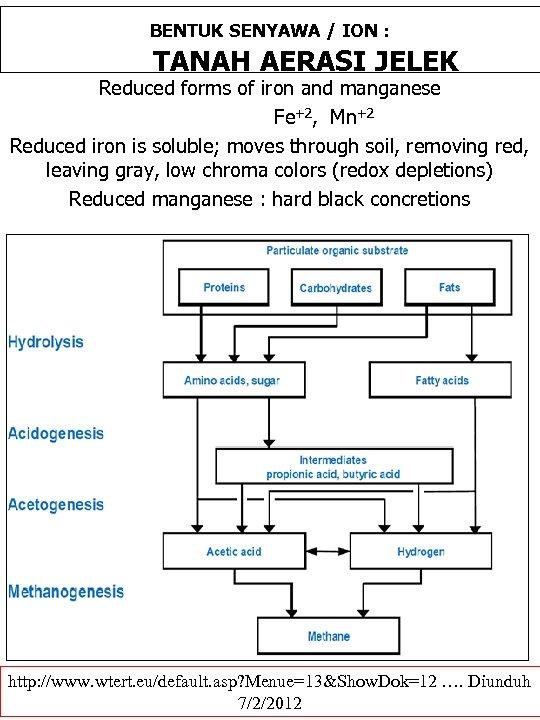 BENTUK SENYAWA / ION : TANAH AERASI JELEK Reduced forms of iron and manganese