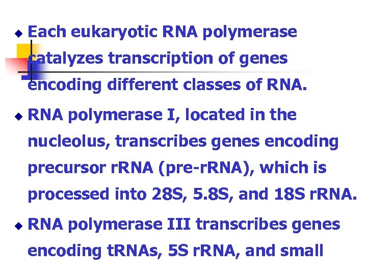 u Each eukaryotic RNA polymerase catalyzes transcription of genes encoding different classes of RNA.