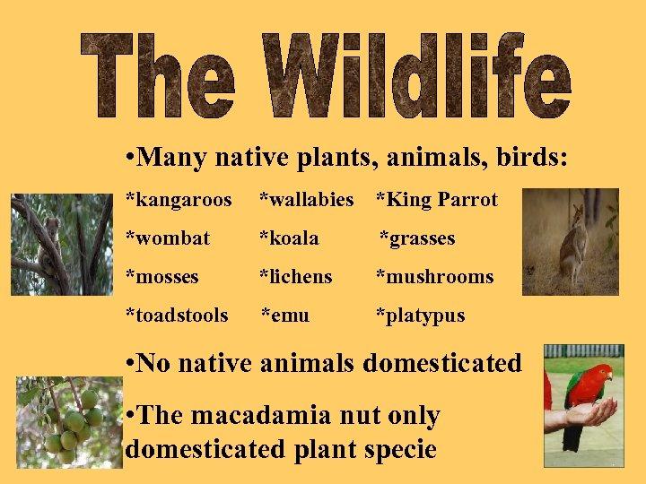 • Many native plants, animals, birds: *kangaroos *wallabies *King Parrot *wombat *koala *grasses