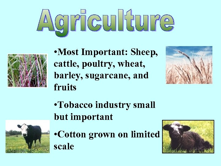 • Most Important: Sheep, cattle, poultry, wheat, barley, sugarcane, and fruits • Tobacco