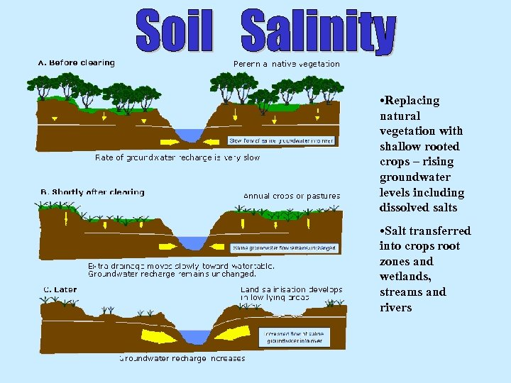 • Replacing natural vegetation with shallow rooted crops – rising groundwater levels including