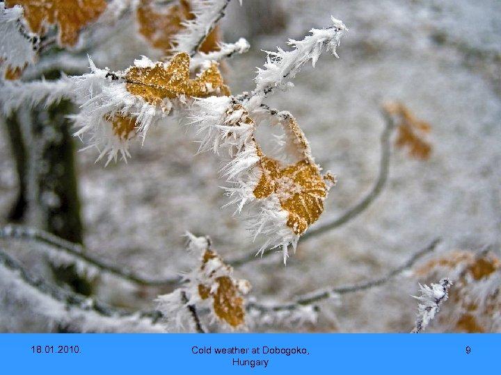 18. 01. 2010. Cold weather at Dobogoko, Hungary 9