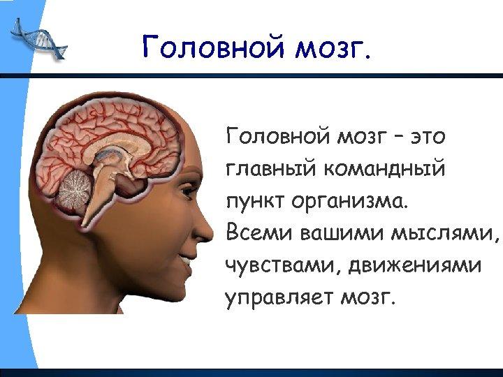 Головной мозг – это главный командный пункт организма. Всеми вашими мыслями, чувствами, движениями управляет