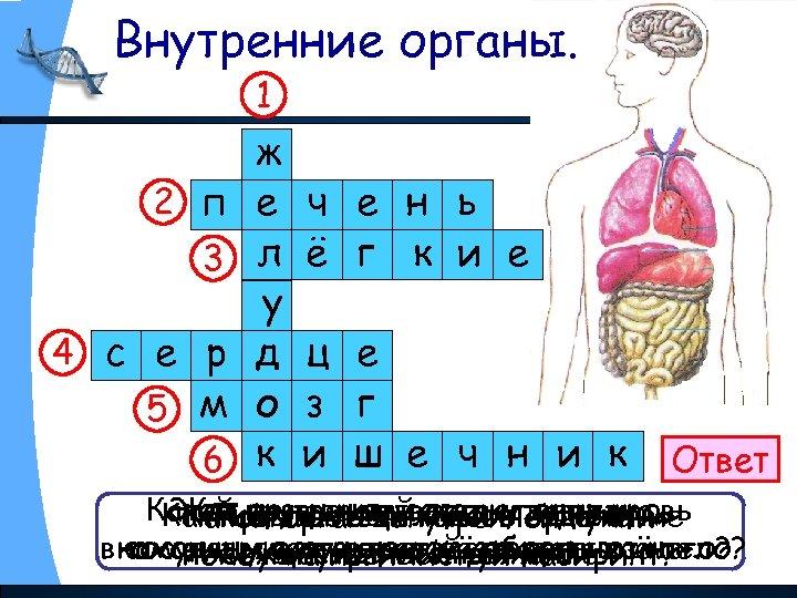 Внутренние органы. 1 2 п 3 4 с е р 5 м 6 ж