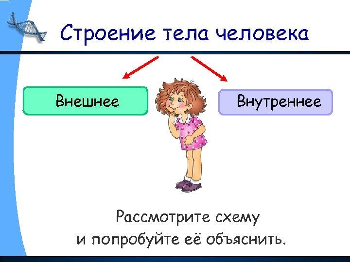 Строение тела человека Внешнее Внутреннее Рассмотрите схему и попробуйте её объяснить.