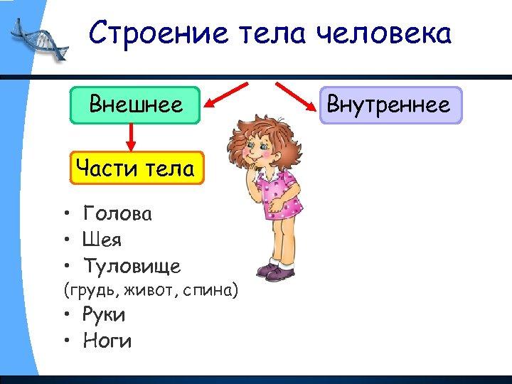 Строение тела человека Внешнее Части тела • Голова • Шея • Туловище (грудь, живот,
