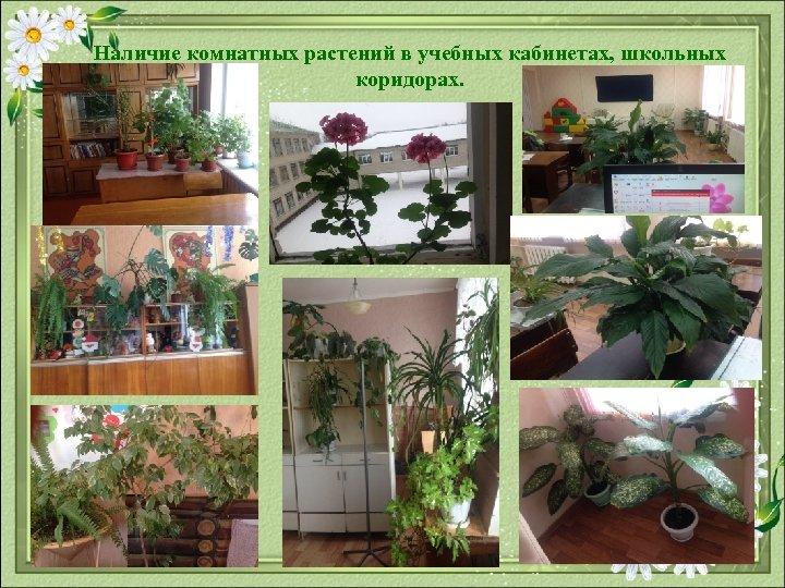 Наличие комнатных растений в учебных кабинетах, школьных коридорах.