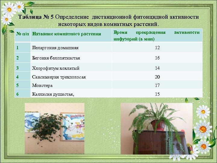 Таблица № 5 Определение дистанционной фитонцидной активности некоторых видов комнатных растений. № п/п Название