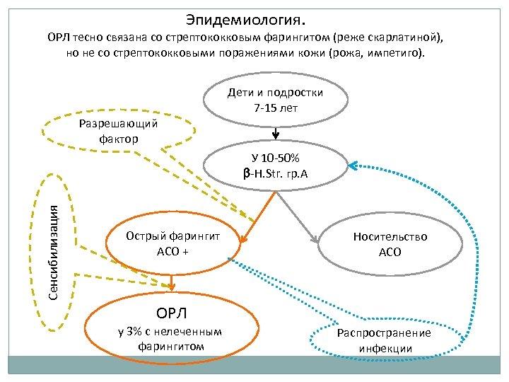 Эпидемиология. ОРЛ тесно связана со стрептококковым фарингитом (реже скарлатиной), но не со стрептококковыми поражениями
