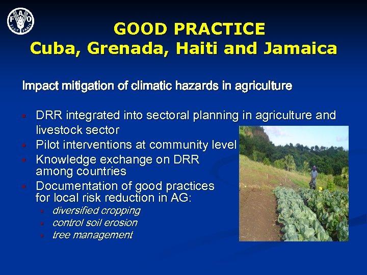 GOOD PRACTICE Cuba, Grenada, Haiti and Jamaica Impact mitigation of climatic hazards in agriculture