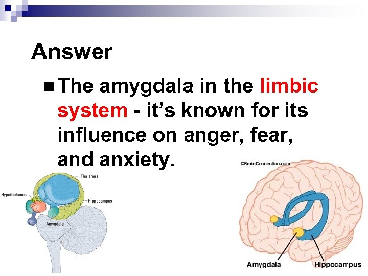 Answer n The amygdala in the limbic system - it's known for its influence