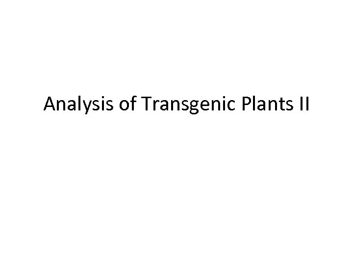 Analysis of Transgenic Plants II
