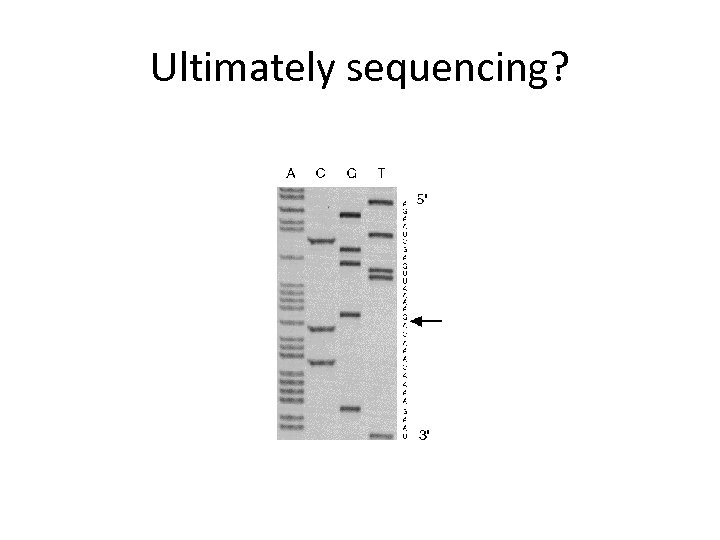 Ultimately sequencing?