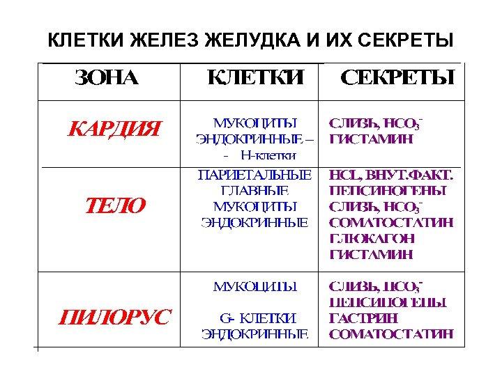 КЛЕТКИ ЖЕЛЕЗ ЖЕЛУДКА И ИХ СЕКРЕТЫ