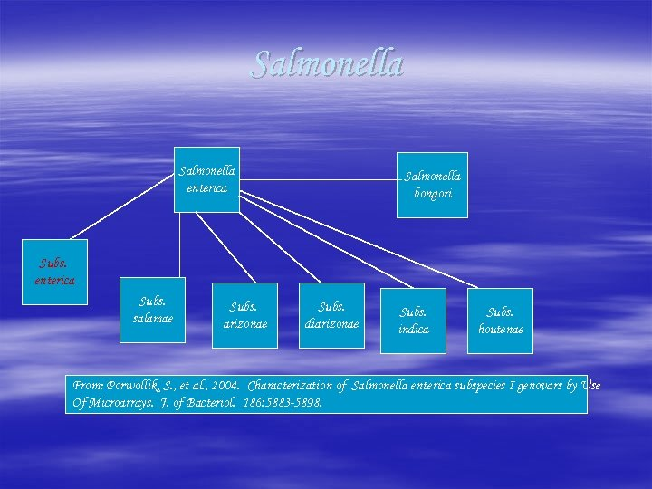 Salmonella enterica Salmonella bongori Subs. enterica Subs. salamae Subs. arizonae Subs. diarizonae Subs. indica