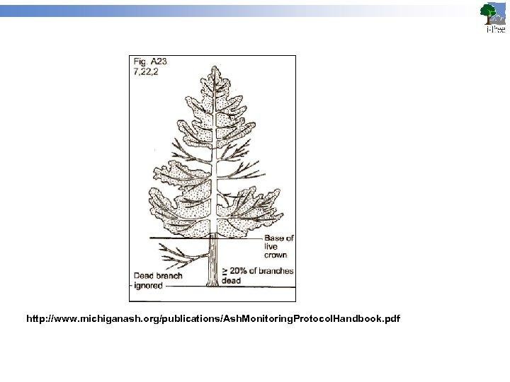 http: //www. michiganash. org/publications/Ash. Monitoring. Protocol. Handbook. pdf