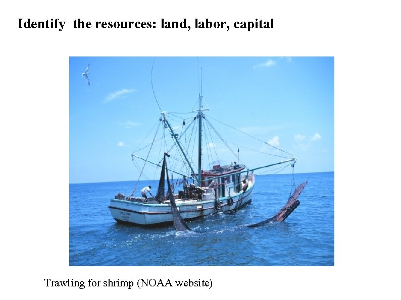 Identify the resources: land, labor, capital Trawling for shrimp (NOAA website)