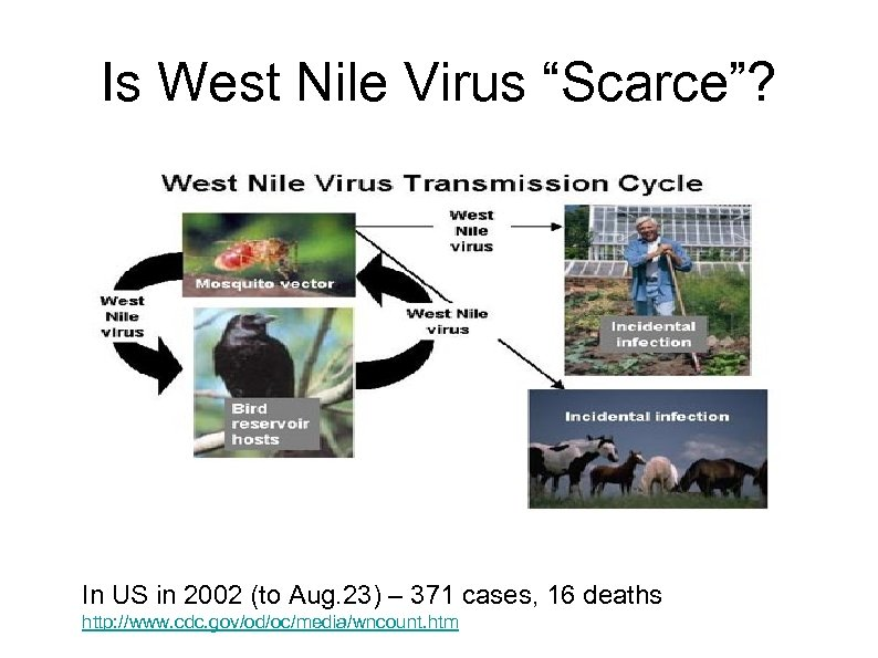 """Is West Nile Virus """"Scarce""""? In US in 2002 (to Aug. 23) – 371"""