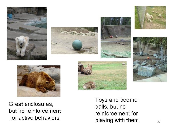 Great enclosures, but no reinforcement for active behaviors Toys and boomer balls, but no