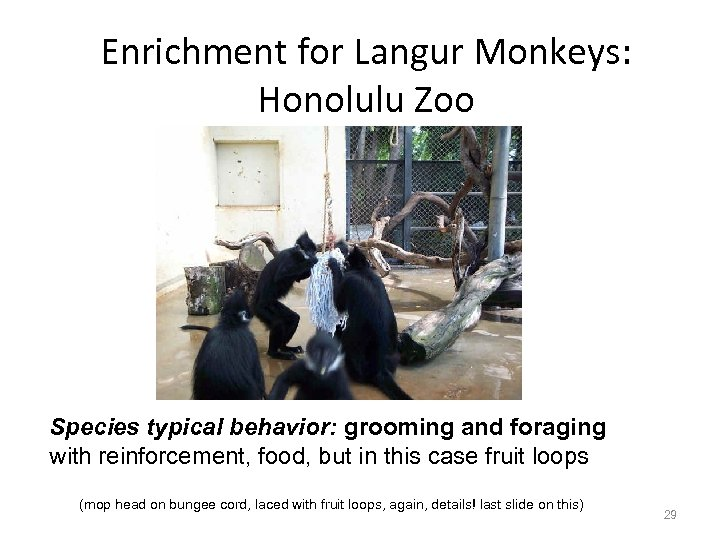 Enrichment for Langur Monkeys: Honolulu Zoo Species typical behavior: grooming and foraging with reinforcement,