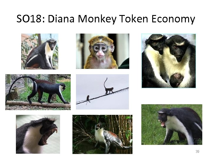 SO 18: Diana Monkey Token Economy 39