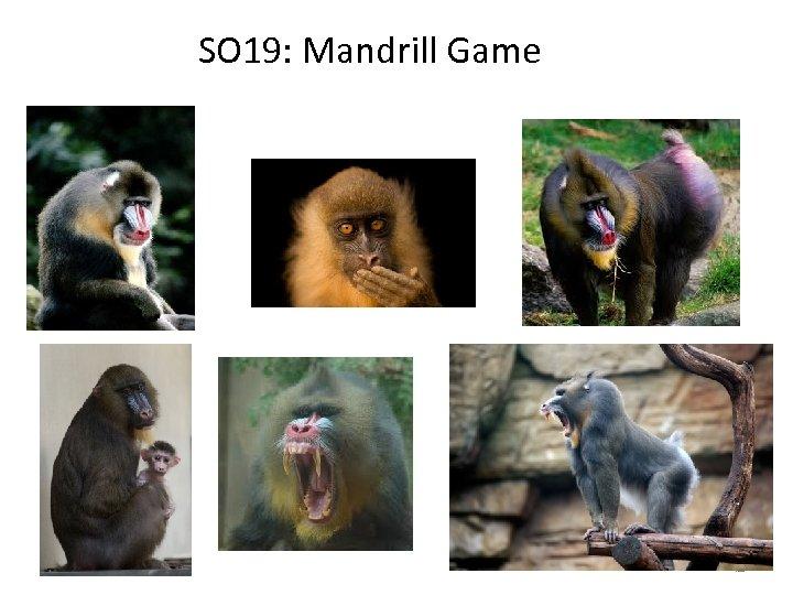 SO 19: Mandrill Game 42