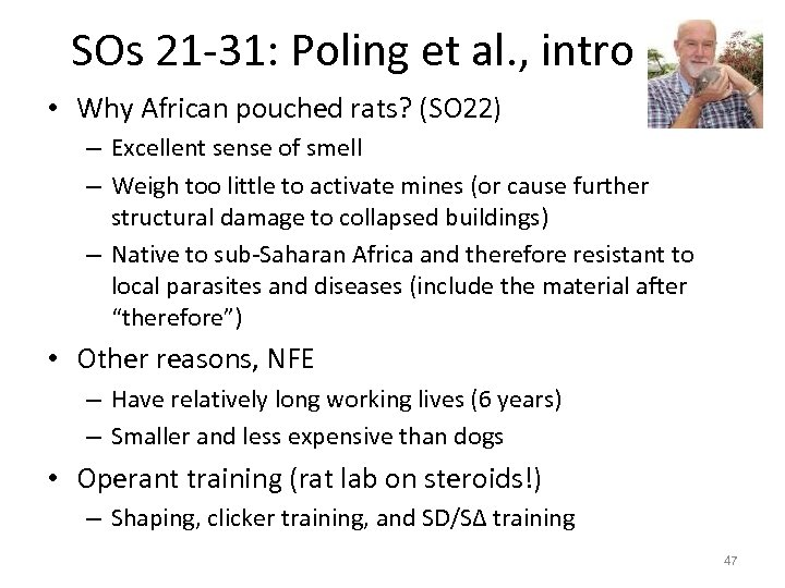 SOs 21 -31: Poling et al. , intro • Why African pouched rats? (SO