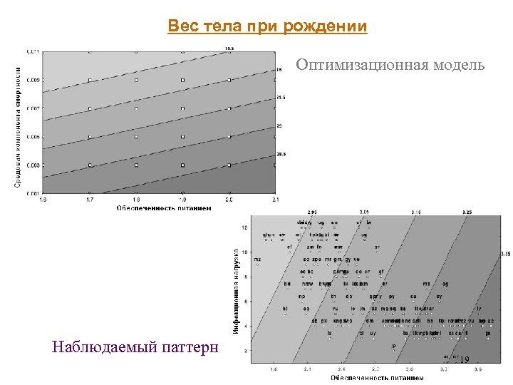 Вес тела при рождении Оптимизационная модель Наблюдаемый паттерн 19