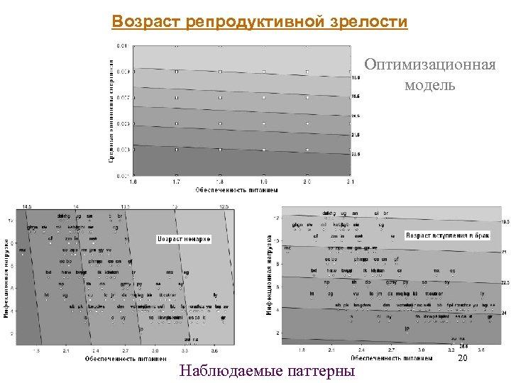 Возраст репродуктивной зрелости Оптимизационная модель Наблюдаемые паттерны 20