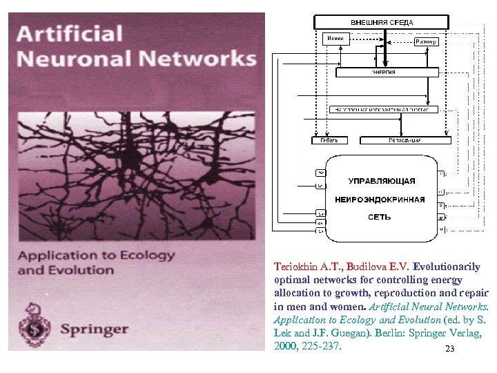Teriokhin A. T. , Budilova E. V. Evolutionarily optimal networks for controlling energy allocation