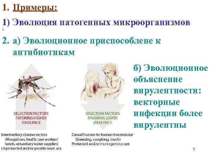 1. Примеры: 1) Эволюция патогенных микроорганизмов 1. 2. а) Эволюционное приспособлене к антибиотикам б)