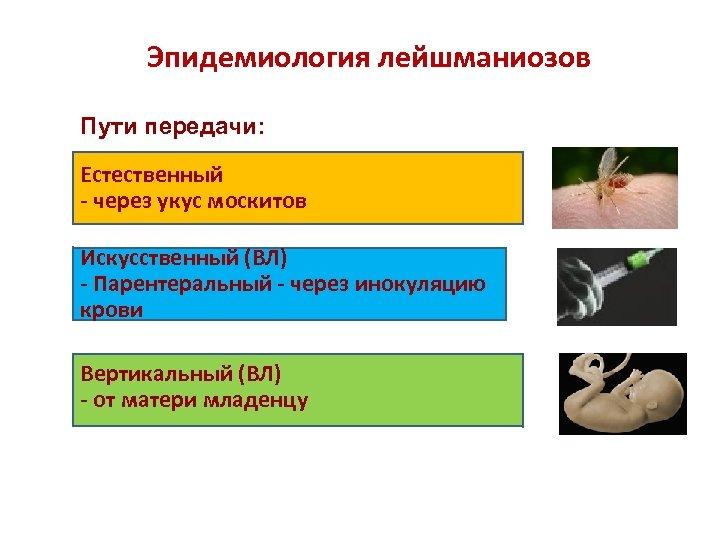 Эпидемиология лейшманиозов Пути передачи: Естественный - через укус москитов Искусственный (ВЛ) - Парентеральный -