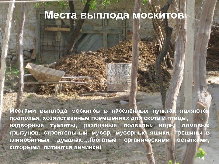 Места выплода москитов Местами выплода москитов в населенных пунктах являются подполья, хозяйственные помещениях для